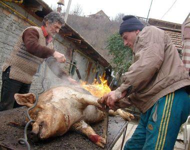 Ai tăiat porc la ţară? Ai nevoie de acest DOCUMENT ca să poţi să transporţi carnea