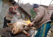 Alertă în România! Se cumpără porci în zonele în care este interzis prin lege acest lucru! Boala se vinde pe bani grei