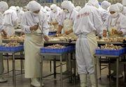 Conditii inumane de munca la mari fabrici producatoare de carne de pui. Angajatii trebuie sa poarte pampersi pentru ca nu au voie sa mearga la toaleta