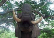 O fetita a fost omorata de un elefant de la Zoo