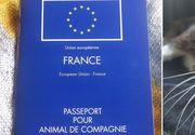 O pisica disparuta in urma cu 8 ani la Londra a fost gasita la Paris