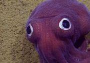 Cercetatorii marini au descoperit caracatita mov in Oceanul Pacific. Creatura arata ca desprinsa din desenele animate