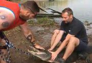 S-au urcat pe spatele aligatorului pentru a se fotografia, insa distractia i-a costat! Cum a platit acest barbat pentru distactia periculoasa