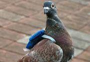 """Gardienii unei inchisori au prins un porumbel mesager in apropierea institutiei. Au ramas uluiti cand au descoperit ce """"misiunea"""" avea pasarea"""