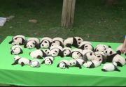 23 de pui de urs panda i-au cucerit pe vizitatorii unei gradini zoologice din China