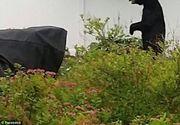 Cruzime fara margini! Ursul care mergea in doua labe, cunoscut in intreaga lume, a fost ucis cu sange rece de un vanator