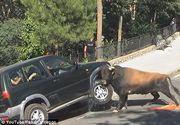 Un taur a distrus o masina 4x4 in timpul unui festival din Spania. In tot acest timp, in autovehicul se aflau pasageri. Imagini incredibile