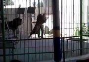 Incident socant la un spectacol de circ. Un barbat a fost insfacat de un leu, chiar in timpul show-ului. Scena infioratoare a avut loc in fata a zeci de copii