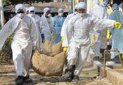 Epidemie de gripa aviara in Franta! 52 de oameni au murit, iar cateva mii de persoane sunt internate in spitale