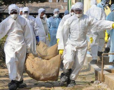 Epidemie de gripa aviara in Franta! 52 de oameni au murit, iar cateva mii de persoane...