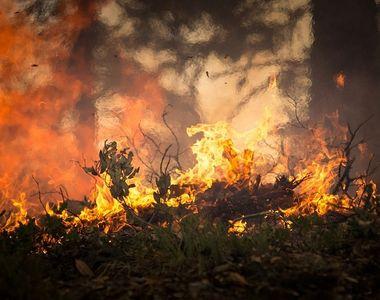Peste 2.000 de persoane au fugit din calea unui incendiu de padure din Andaluzia