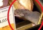 Imagini de infarct, filmate in aeroport! Un soarece mananca dintr-un sandvis expus in vitrina