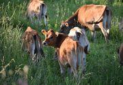 Au plecat sa isi duca vacile la pascut si nu s-au mai intors niciodata! Unde au fost gasite trupurile neinsufletite ale unui cuplu disparut de 75 de ani