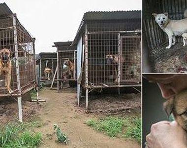 149 de caini, care urmau sa fie electrocutati si transformati in supa, au fost salvati...
