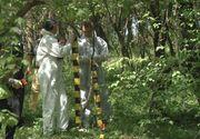 Politia elena a gasit ramasite omenesti devorate de animale intr-o padure; anchetatorii cred ca e vorba de o britanica