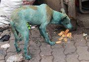 La Mumbai cainii se fac albastri din cauza poluarii din aer! Fenomenul care ii ingrijoreaza pe specialisti