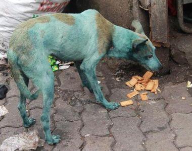 La Mumbai cainii se fac albastri din cauza poluarii din aer! Fenomenul care ii...