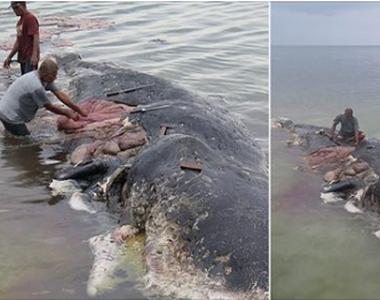 O balenă uriaşă, găsită moartă în largul coastelor Indoneziei. Avea în stomac peste 115...
