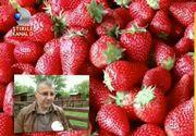 VIDEO Aveti grija ce fructe si legume cumparati! Adeseori, acestea sunt tratate cu insecticide, daunatoare sanatatii