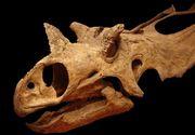 Au fost descoperite doua noi specii de dinozauri in Statele Unite