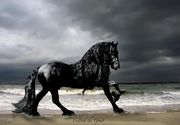 Acesta este cel mai frumos cal din lume. Frederik the Great are o armata de oameni care se ocupa de imaginea lui