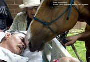 Un veteran de razboi a avut o singura dorinta inainte de a muri: sa-si ia ramas bun de la prietenii sai de suflet, caii Sugar si Ringo. Momentul revederii a fost coplesitor