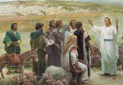 """Apostolii lui Iisus il numeau """"copacul vietii""""! Care este cel mai bun remediu antic! Acum se gaseste peste tot si e super ieftin!"""