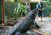 Sa fie adevarat? Un crocodil de noua metri lungime a fost zarit in Australia! E cat un dinozaur!