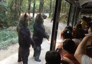 Ursii se regasesc in topul celor mai prietenoase animale. Imaginile de mai jos o demonstreaza