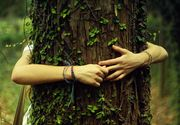 De ce este imbratisarea copacilor o terapie cu efecte benefice, sustinute stiintific!