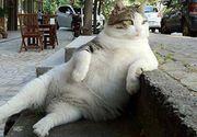 Tombili, celebra pisica din Istanbul, a murit