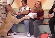 Momente de panica la un show TV: Un leu inhata o fetita din bratele mamei, in timp ce acesta rade in hohote