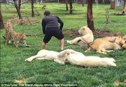 Moment dramatic la o gradina zoologica. Un ingrijitor este salvat din ghearele unui leopard de un tigru