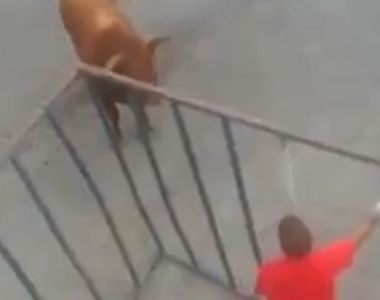 Imagini terifiante! Un barbat aflat intr-o cusca provoaca un taur. Credea ca e in...