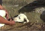 Imagini induiosatoare! Un caine a ramas blocat intr-o gaura cand cauta mancare. Cei care l-au gasit au incercat din rasputeri sa il salveze. Cum s-a terminat totul