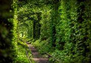 """""""Tunelul iubirii"""" din Romania, locul care figureaza pe harta """"comorilor ascunse"""" din Uniunea Europeana! Ai fost aici?"""