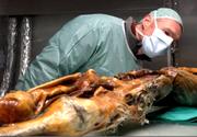 "Cea mai veche mumie din Europa, ii uimeste pe cercetatori. ""Otzi"", care a murit in urma cu 5.300 de ani, avea intoleranta la lactoza si predispozitie catre bolile cardiovasculare"