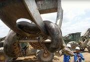 Un anaconda urias a fost descoperit pe un santier din Brazilia! Sarpele are 400 de kilograme si un peste 10 metri lungime