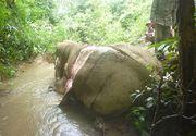 A aparut un nou tip de comert ilegal care implica uciderea elefantilor si jupuirea pielii acestora. Pielea bietelor mamifere este folosita in scopuri medicinale si in industria bijutiera