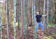Povestea italienilor care înfiinţează în România 20 de hectare de bambus gigant. Veniturile anuale calculate: 22.000 euro/ha. Sunt interesati de colaborari cu fermierii romani