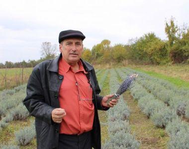 Lavanda, o afacere profitabila pentru tot mai multi agricultori. Cat ajunge investitia...