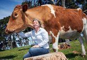 Big Moo, cea mai mare vaca din lume. Are peste 1,90 inaltime si cantareste peste o tona. Cum arata animalul gigant