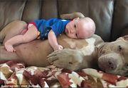 Prietenia speciala dintre un bebelus si un bulldog. Aceste imagini au cucerit internetul!