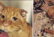 Era cea mai trista pisica de pe internet si nimeni nu dorea s-o adopte. Un inger de femeie a luat-o acasa. Transformarea este incredibila