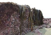 Fenomen straniu petrecut dupa cutremurul din Noua Zeelanda. Ce a aparut pe plaja dupa ce fundul marii s-a inaltat cu 2 metri