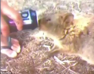Trei tineri sunt cautati de politisti dupa ce i-au dat vodka unui animal pe cale de...