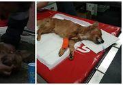 Snoopy, catelul resuscitat de pompier din incendiul de vineri de la Pitesti, a murit. Stapanul lui este in coma