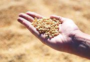 Mare atentie la alimentele care contin soia. Ce trebuie sa stii despre aceste produse