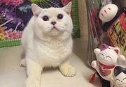 O pisica a fost omorata si jupuita de stapana pentru ca proprietarul pet-shopului a refuzat returnarea ei