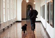 """Cainele familiei Obama a muscat-o de fata pe prietena Maliei, fiica fostului presedinte american. """"Il urasc pe Sunny"""""""